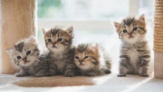 Keutamaan Dan Manfaat Memelihara Kucing