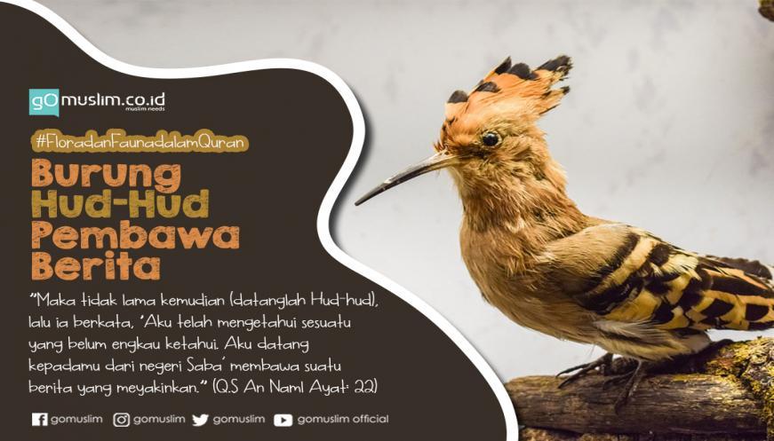 Hikmah Dalam Kisah Nabi Sulaiman Dan Burung Hud Hud Si Pembawa Berita
